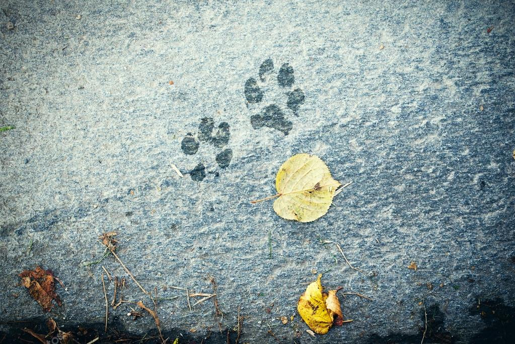 The dog s footprints on cement floor background