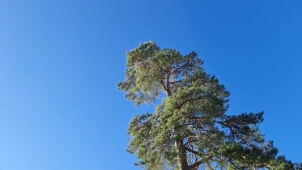 Gyönyörű idő kihagyása több mint színes fa tetején fenyőfa. Gyönyörű természet háttér.