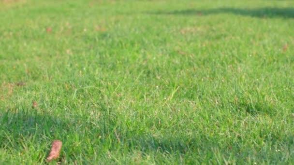 Schöne Aussicht auf den Vorgarten des privaten Gartens. Grüner Rasen. Schweden.