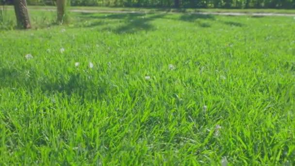 Schöne Aussicht auf den Vorgarten des privaten Gartens. Grüner Rasen. Schöne Hintergründe. Schweden.