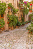 Photo Flower street in Spello (Umbria, Italy)
