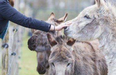 Donkeys seeking attention