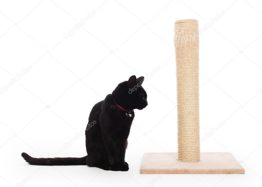 griffoir chat noir
