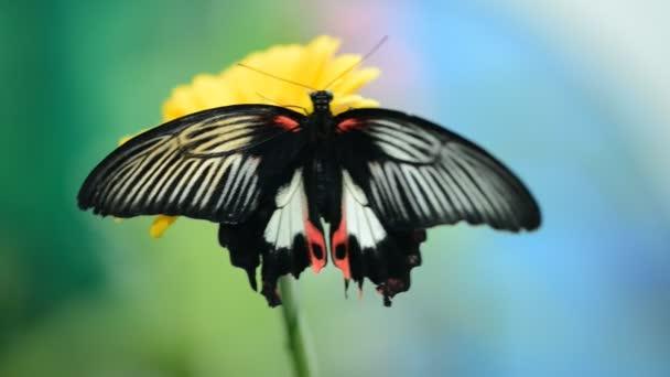 Rovar pillangó a virág