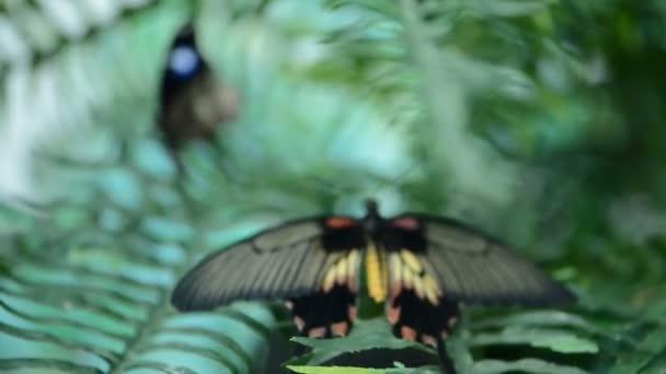 krásný hmyzu motýl