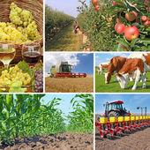 Fotografia agricoltura - collage