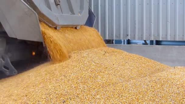 Kukuřice, vykládání z auta