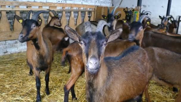 kozy na farmě