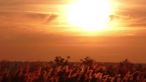 Reed v západu slunce, krajina