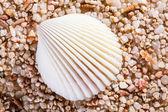 Fotografie mořské mušle na kamenech