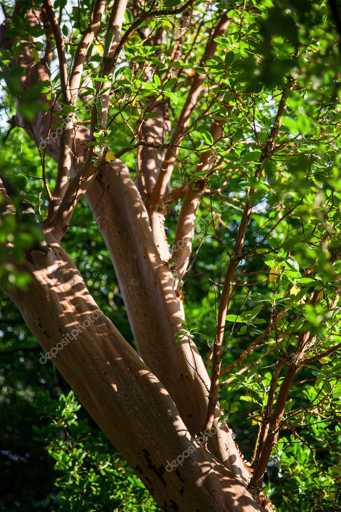 Fragvent of a cork tree