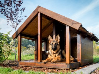 German shepherd in its kennel
