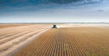 Harvesting of soy bean field