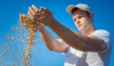 harvest  soybeans