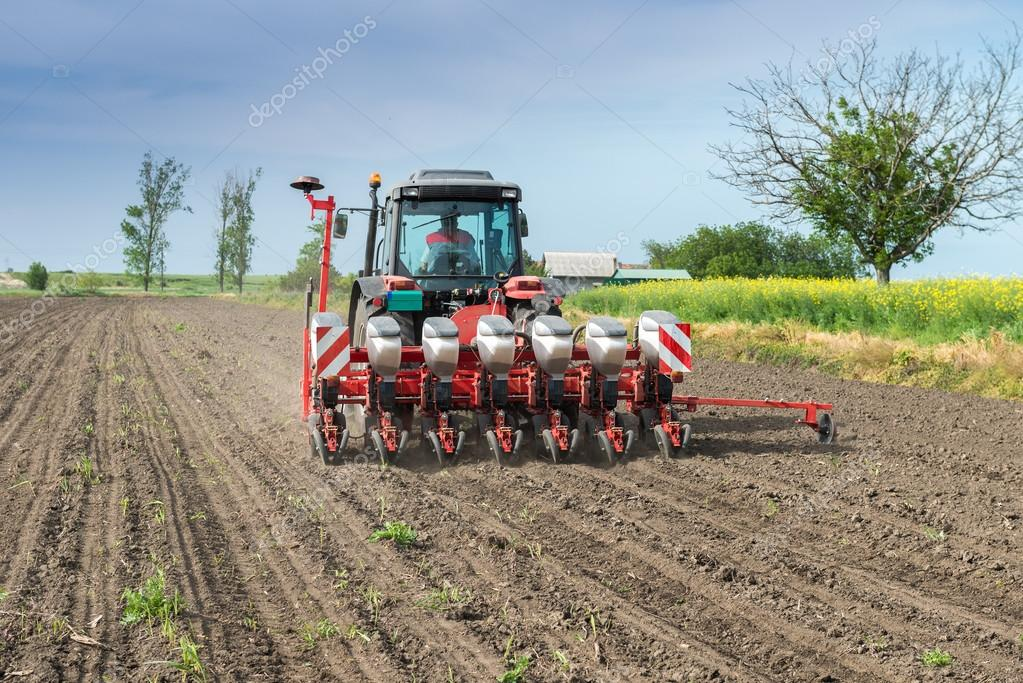 wheat sowing
