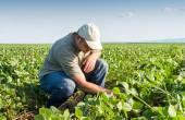 Fotografia coltivatore nei campi di soia