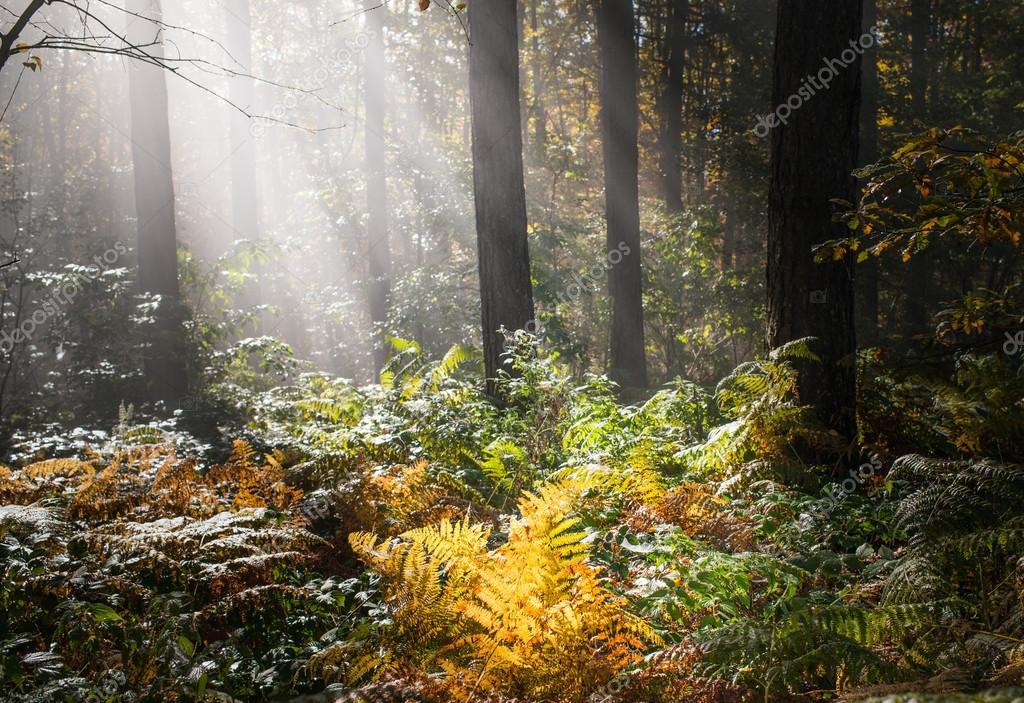 Фотообои Wet autumn forest with fog