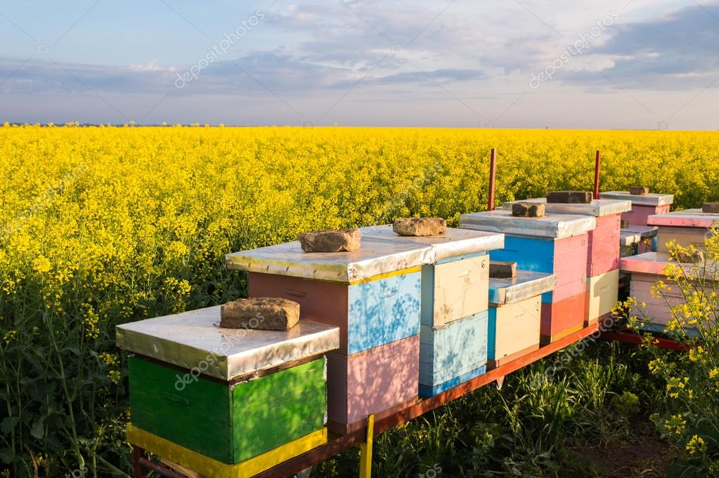 Apiary in the field