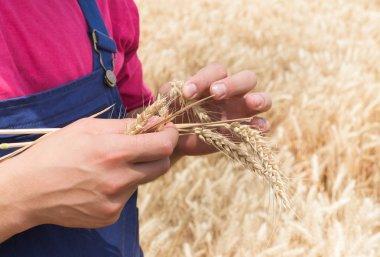 farmer in wheat fields