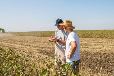 Farmers in soybean fields