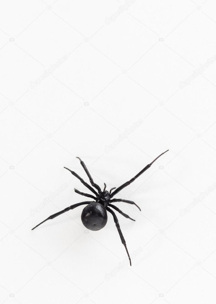 Black widow spider close up