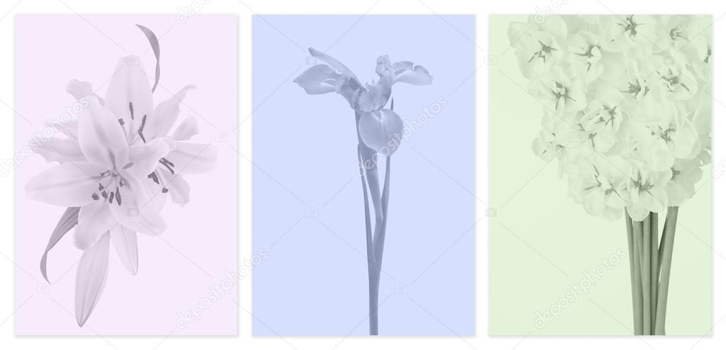 Muted color panels with flowers