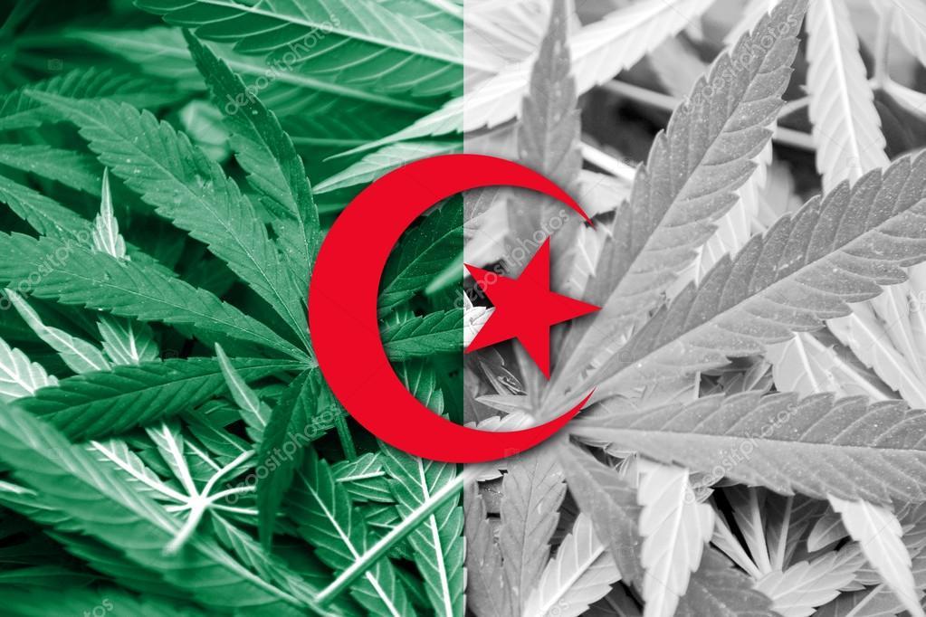 legalizing marijuana thesis