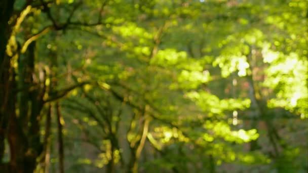 rozmazané pozadí, deštný prales se slunečními paprsky prolamujícími listí