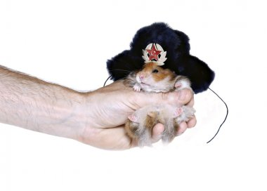 Brown hamster in Russian national traditional fur hat with ear f