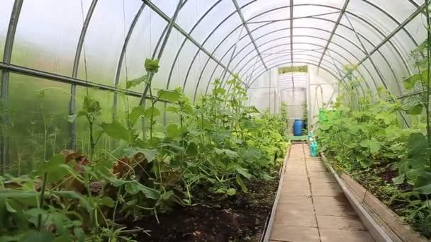 pěstování zeleniny ve sklenících vyrobené z průhledného polykarbonátu