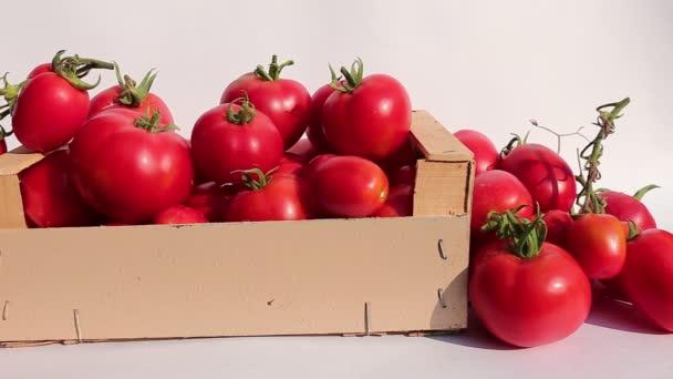 Mnozí z šťavnatá zralá červená rajčata