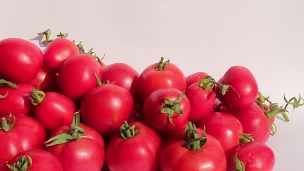 viele saftige reife rote Tomaten