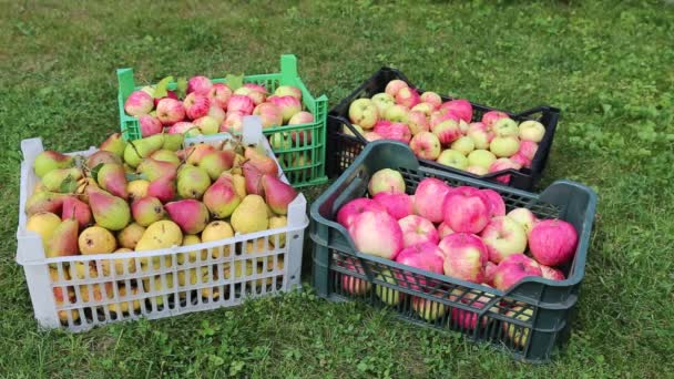 Video harvest of pears and apples