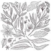 Vector Tropical Plants Set