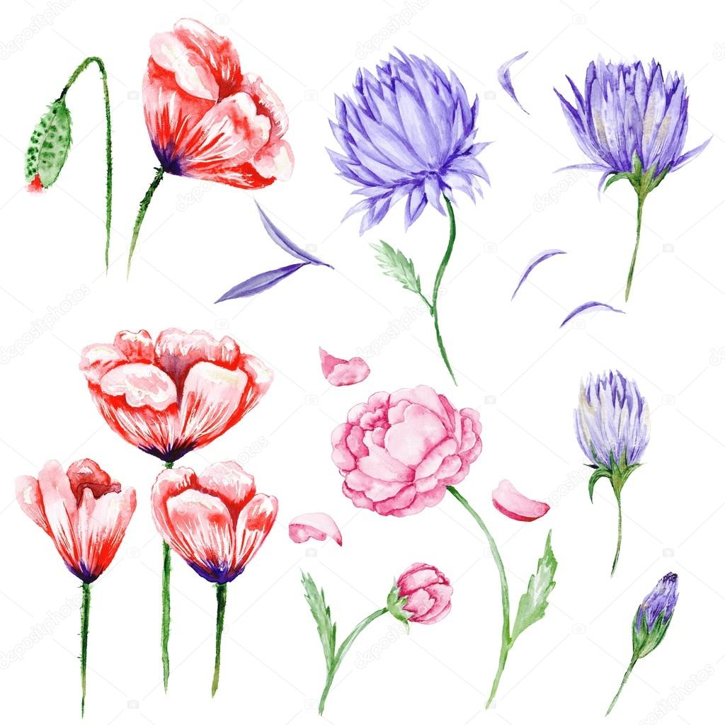 Large Set of Watercolor Flowers