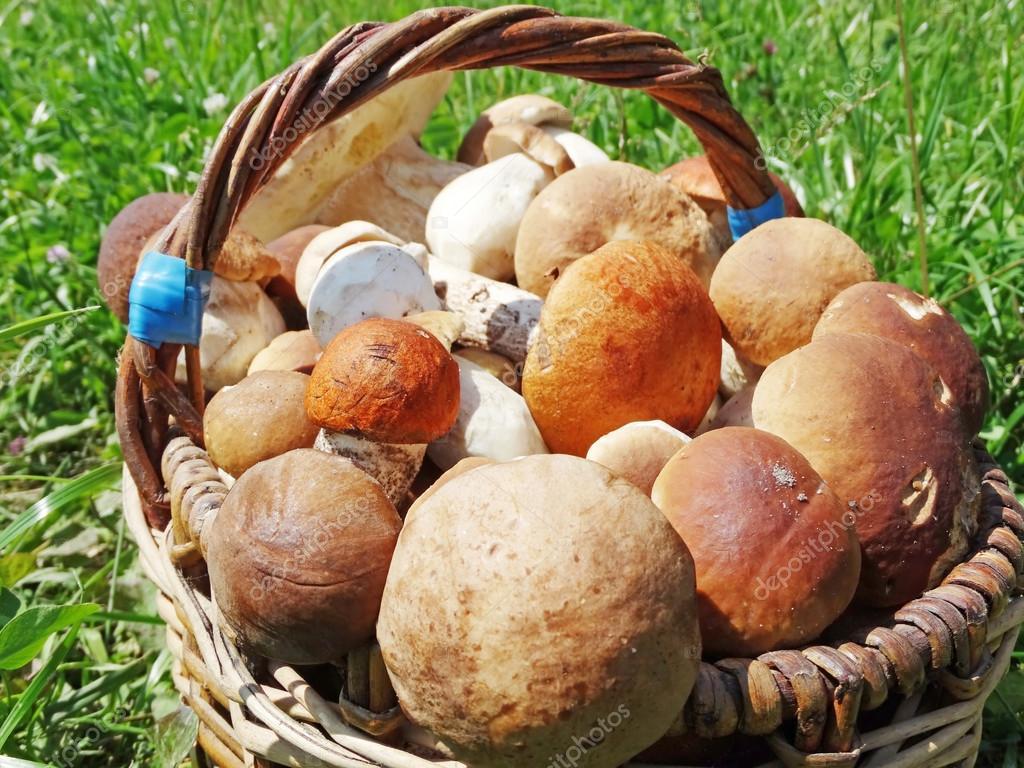 Свежие лесные грибы в корзине — Стоковое фото © Nastya22 ...