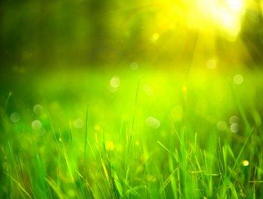 Nature blurred background.