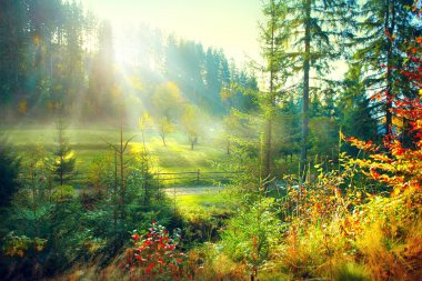 Beautiful morning misty old forest and meadow in countryside. Autumn nature scene stock vector