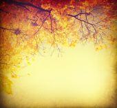 Fotografie podzimní pozadí abstraktní