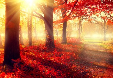 Autumnal park in sunlight