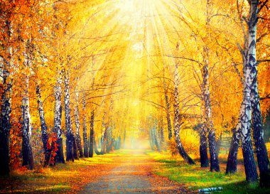 Autumn Trees  in sun rays