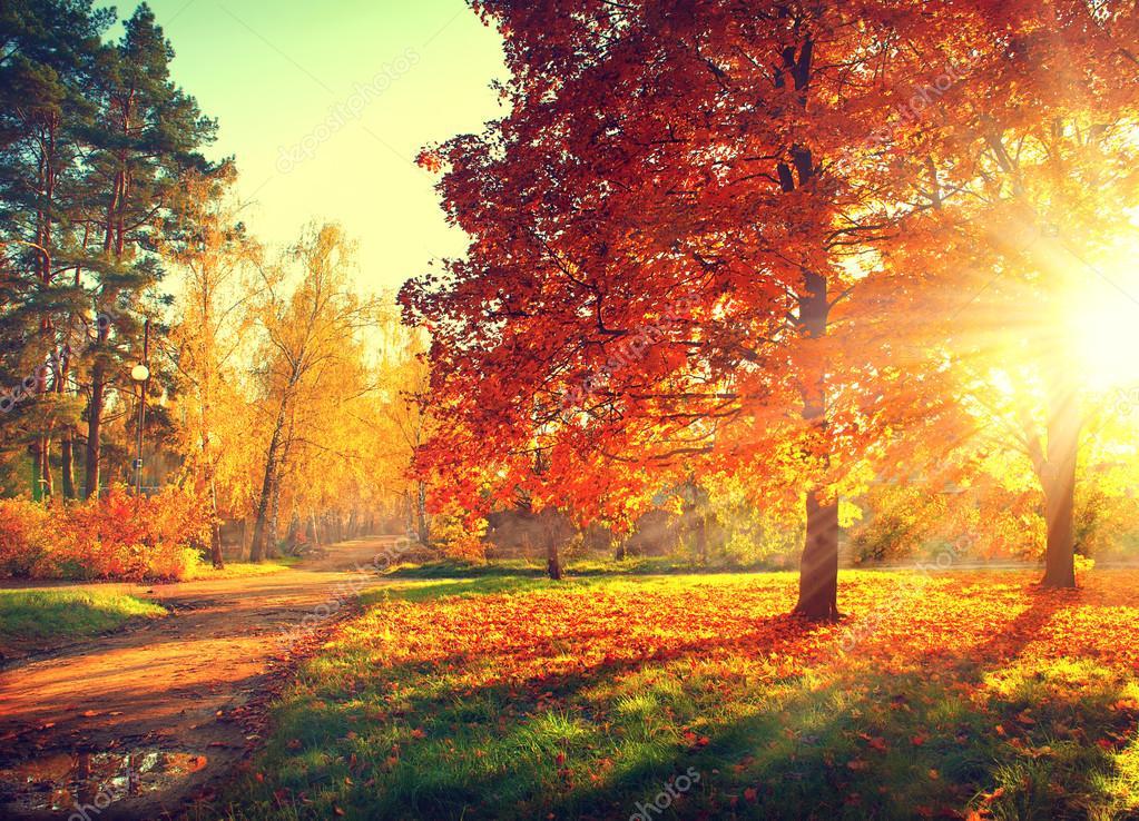 Trees  in sun light
