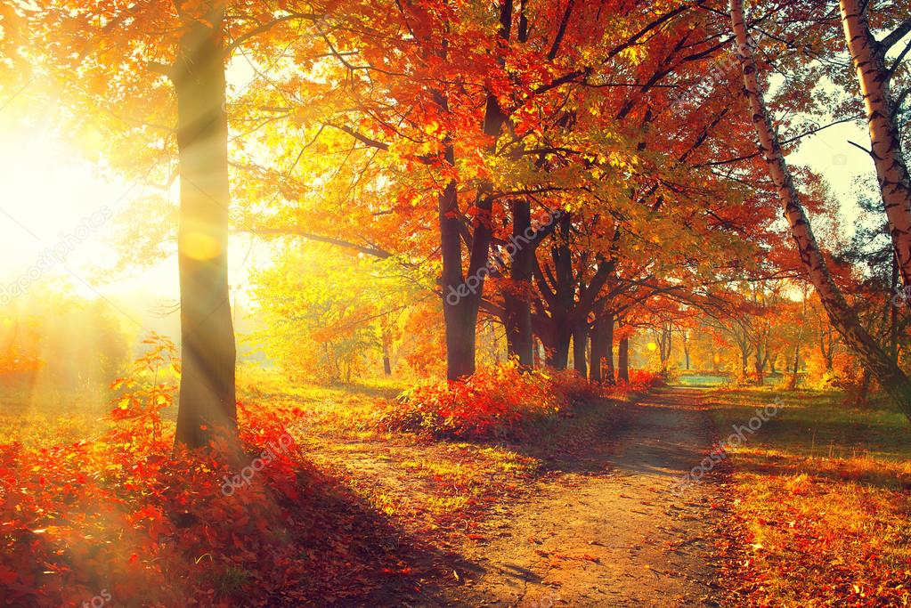 Autumnal Trees  in sun rays