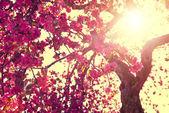 Kvetoucí strom nad slunečnou oblohou