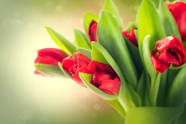 Beautiful red tulips bouquet