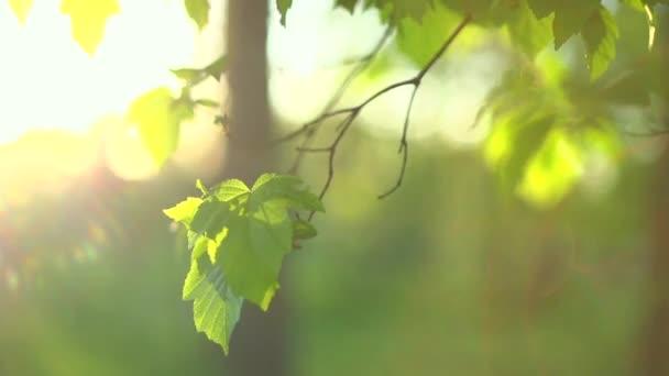 Natur Frühling grüne Blätter.