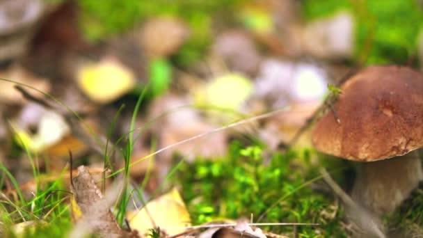 Őszi erdőben gomba termesztés