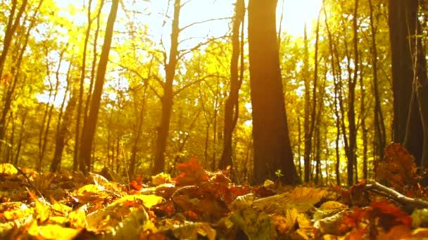 Herbsttrockenes Laub fällt auf den Boden