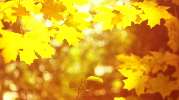 Žlutá pádu rozmazané pozadí