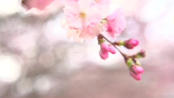 jarní květ pozadí